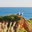 Two seagulls on a rocky shore in the grass. Against the backdrop — Stock Photo #25635555