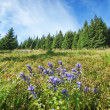 Gorgeous blue flowers among the greenery and dense forests in th — Stock Photo #28247711