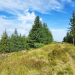 Path pathway middle of the forest and green grass. Carpathian mo — Stock Photo