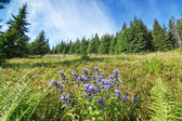 Gorgeous blue flowers among the greenery and dense forests in th — Stock Photo