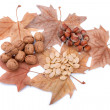 Autumn theme with yellow leaves, nuts and pumpkin seeds. Gifts of nature. — Stock Photo