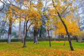 Beautiful autumn city park. For recreation. — Stock Photo