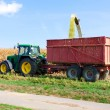 Corn harvest - Stock Photo