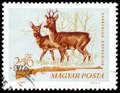 Hunting stamp from Hungary - circa 1964 — Stock Photo