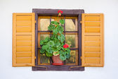 Old window with flower — Stock Photo