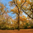 Stock Photo: Autumn woods