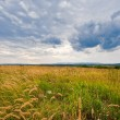 Meadows in autumn with clouds — Stock Photo