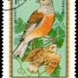 HUNGARY - CIRCA 1973: Postage stamp printed in Hungary showing L — Stock Photo #39718299