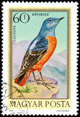 HUNGARY - CIRCA 1973: Postage stamp printed in Hungary showing R — Stock Photo
