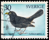 SWEDEN - CIRCA 1970: A stamp printed in Sweden shows Common Blac — Stock Photo