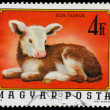 HUNGARY - CIRCA 1974: A stamp printed in Hungary shows image of — Stock Photo