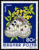 HUNGARY - CIRCA 1974: A Stamp printed in Hungary shows butterfly — Stock Photo