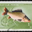 HUNGARY - CIRCA 1963: A stamp printed in Hungary Showing fish, c — Stock Photo