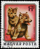 HUNGARY - CIRCA 1976: A stamp printed in Hungary shows two young — Stock Photo