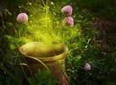 Olla mágica con el trébol de flores — Foto de Stock