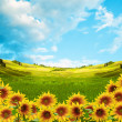 Stock Photo: Landscape with mountains, fields and sunflowers