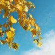 Autumn leaves against a beautiful sky — Stock Photo