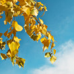 Autumn leaves against a beautiful sky — Stock Photo