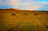 Autumn field with the harvested hay — Stock Photo