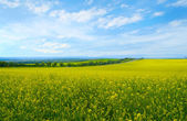 Paesaggio con campi fioriti — Foto Stock
