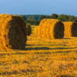Hay bale in a field under a blue sky — Stock Photo