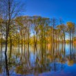 Stock Photo: Reflection of trees in the river at dawn