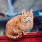 坐在围墙上的红色猫 — 图库照片