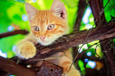 Young Kitten Sitting On Branch — 图库照片