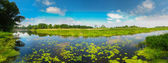 View On The Bog. Grass And Water. — Stock Photo