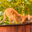 Red Cat Sitting On The Fence — Stock Photo #22521763