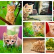 Peaceful orange red tabby male kitten. Set Collage.Old House On — Stock Photo