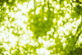 Spring bokeh background — Foto Stock