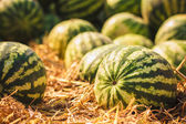 Watermelons were piled up — Stock Photo