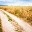 Rural Countryside Road Through Fields With Wheat — Stock Photo