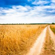 Rural Countryside Road Through Fields With Wheat — Stock Photo #33307487