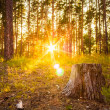 Sunset In Autumn Forest  — Stock Photo
