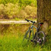Black GT bike standing near oak trunk on a spring sunny park. MI — Stock Photo
