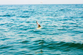 Flying seagull over blue water background — Stock Photo