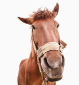 Funny closeup of a horse - wide angle — Stock Photo