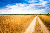 Rural Countryside Road Through Fields With Wheat — Photo