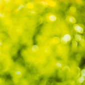 Spring bokeh background — Zdjęcie stockowe