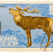 Postage stamp printed in USSR shows image of Cervus elaphus xa — Stock Photo #39168317