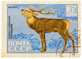 Postage stamp printed in USSR shows image of a Cervus elaphus xa — Stock Photo