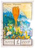Stamp printed by the Soviet Union Post shows Sharoyans saffron — Stockfoto