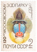Postal stamp printed in USSR shows a Mandrill, series 120 annive — Stock Photo