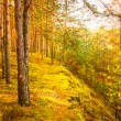 Stock Photo: Colorful Autumn Trees In Forest