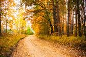 árvores de outono coloridas na floresta — Fotografia Stock