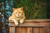 Red Cat Sitting On The Fence — Zdjęcie stockowe