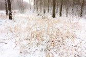 Snow In Forest — Stock Photo