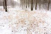 在森林中雪 — 图库照片